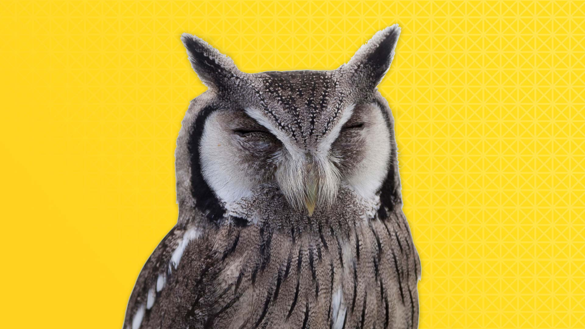 What the hell is predictive analytics & why should I give a hoot?